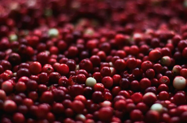 merișoare cranberries